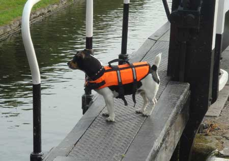 dog in inflatable jacket with handle