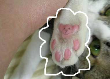 drawing on cats paw