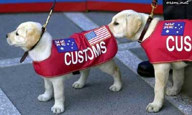 two customs puppies one is checking out the others bottom